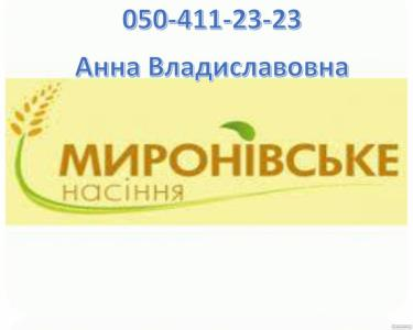 Насіння ярого ячменю 1р./ел.