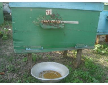 Продам бджолосім'ї та бжолопакети