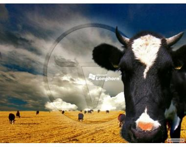 Купить премикс для дойных коров, Швейцария Премиксы для коров