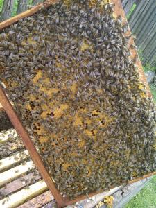 продам бджолопакети 4 шт