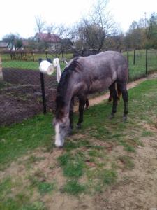 Продам лошадь (кобыла, лошадь)