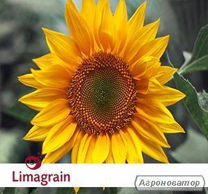 Семена подсолнечника LG Мегасан