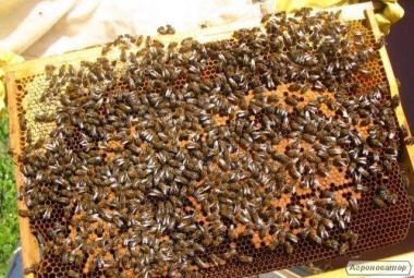 Продам бджолосім'ї (можливо продаж з вуликами) зі своєї пасіки