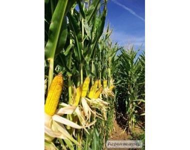 Насіння кукурудзи Dow Seeds (Днз сідс)