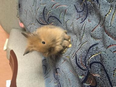 Продам маленьких кроленят