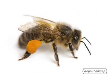 Відводки бджіл(кінець травня)
