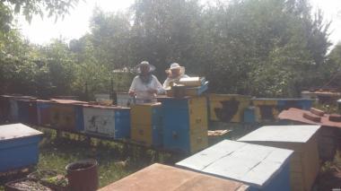 Продам соняшниковий мед з власної пасіки
