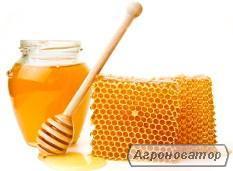Продам мед, пилок, маточне молоко та інші продукти бджільництва