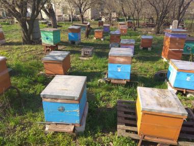 Пчелосемьи украинской степной