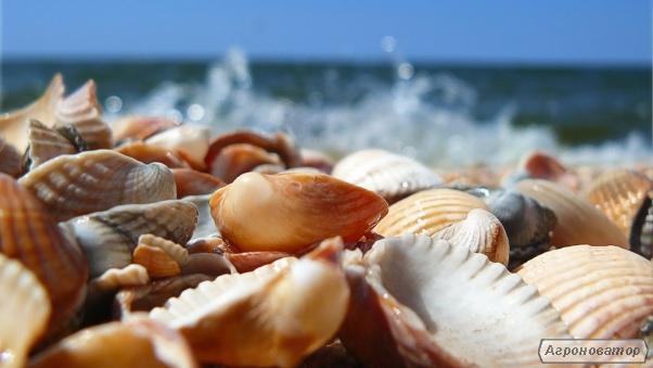 Кормовая ракушка морская, дробленная