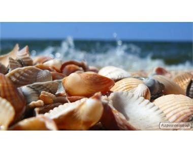 Кормовая ракушка морская и речная