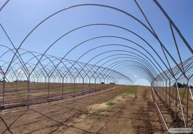 Плівкові тунелі для вирощування ягід полуниці, малини, чорниці