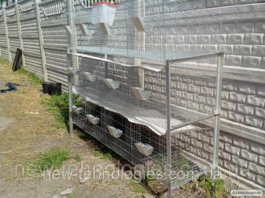 Клітки для утримання кролів