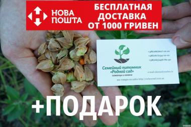 Ашвагандха семена (20 штук) (ашваганда, индийский женьшень)