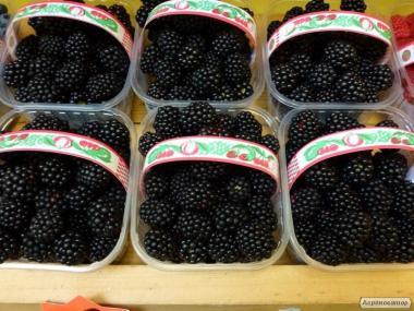 Пінетки пластикові для ягід малини, полуниці, ожини, чорниці