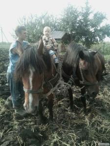 Продам коня тяжеловоза срочно