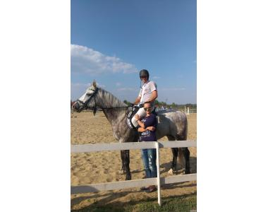 Продам коня(мерин) Англо-рысак