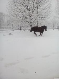 Продам коня!!