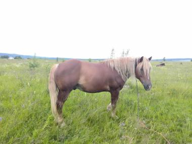 Продам коней недорого