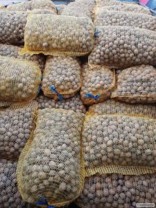 Продам волоський горіх (в шкаралупі, бійнею, кругляк, світлий)