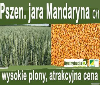 Насіння пшениці ярої