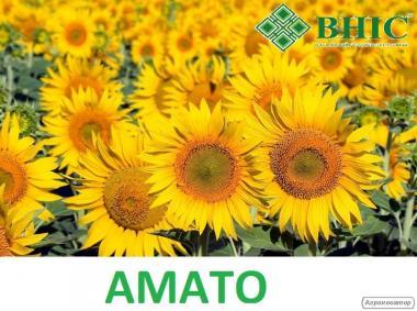 Подсолнечник Амато под 50гр гранстар от производителя