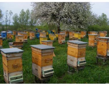 Племінний пчелопитомник Хоми