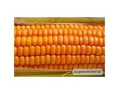 Семена кукурузы венегерской селекции МВ ТС 251-фао 280