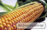 Продам посівмат кукурудзи!!!!!
