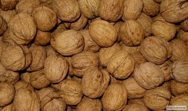 Продаємо оптом волоський горіх цілий на експорт