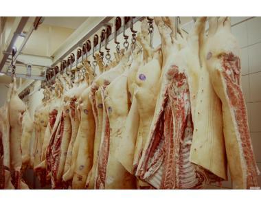 Куплю свинину в напівтушах