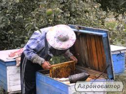 Продажа пчелосемьи