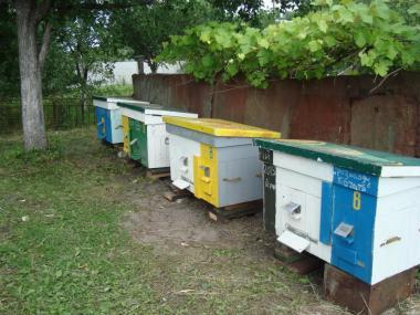 Продаю сім'ї бджіл з вуликами