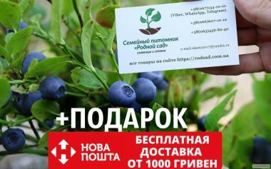 Черника обыкновенная семена (20 штук) для саженцев чорниця насіння