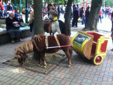 Жеребец пони 4 года с тележкой на 2-х деток