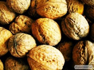Продам грецкие орехи опт