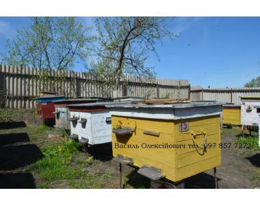 Продам пчелопакеты и пчелосемьи