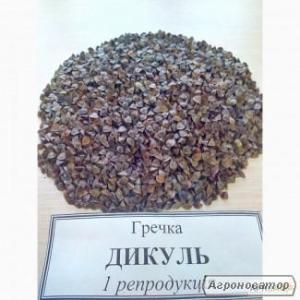 Семена гречихи Дикуль,Девятка.