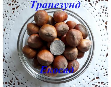 Саджанці фундука сорт Трапезунд