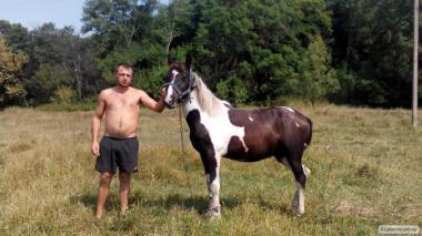 Продам лошадь (жеребец)
