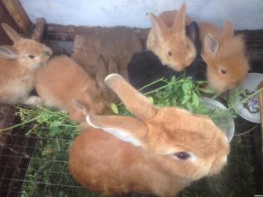 Дуже красиві декоративні кролики