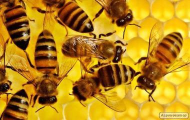 Продам пчелосемьи,пчелы, пчелосемьи, пчелы.