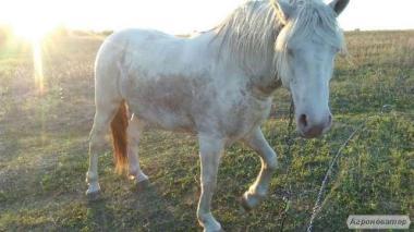 Кінь,кобила