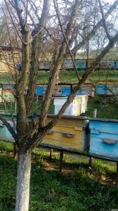 Продам гірський мед (різнотрав'я)