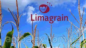 Семена кукурузы Латизана (Latizana) Limagrain