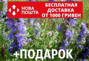 Иссоп семена (20 шт) (узколистный или лекарственный) синий зверобой