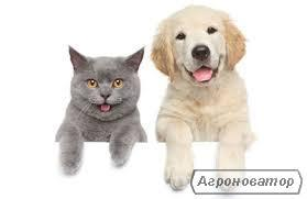 Кормова добавка для с/г тварин: ароматизатор-сластитель