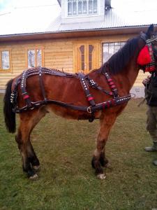 Продаю упріж для лошади