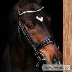 Продам коня для спорту 6 років виїздка