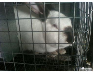 Продам кроликов на содержание ,клетки под заказ.